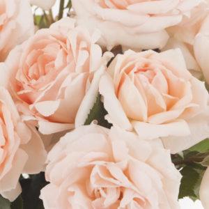 Baptême de VILLE DE FONTENAY AUX ROSES ®, une histoire singulière entre la ville et les roses …