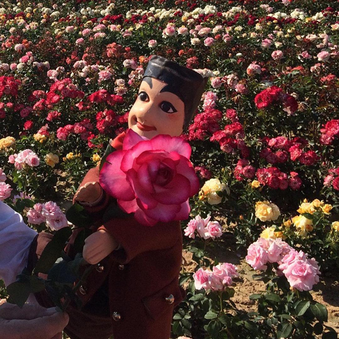 C'est en pépinière que GUIGNOL a découvert la rose qui porte son nom.