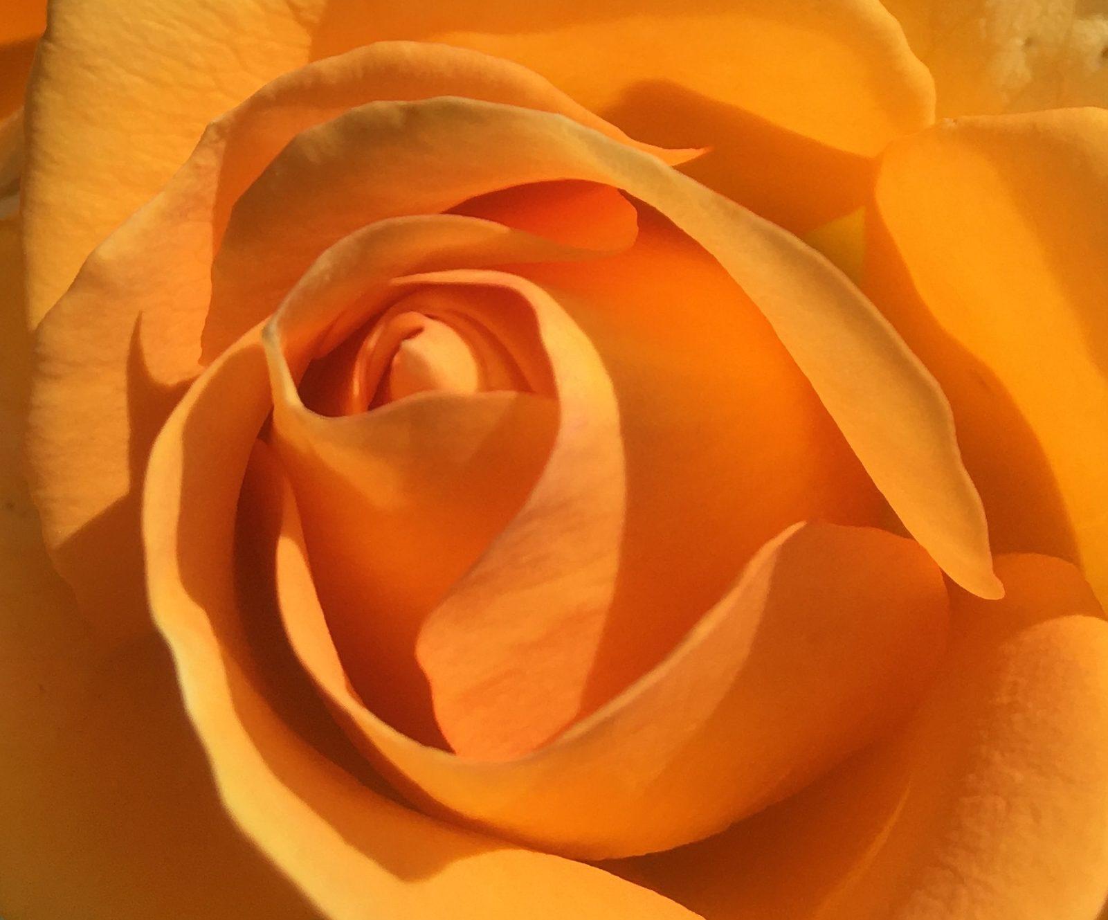 YELLOWSTONE ® Oraleymy