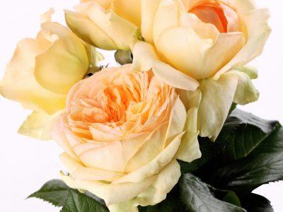 ANAHE Bouquet